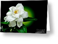 One Sensual White Flower Greeting Card by Carol F Austin
