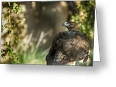 Only An Eagle Can Be As Sharp As An Eagle Greeting Card by Munir El Kadi