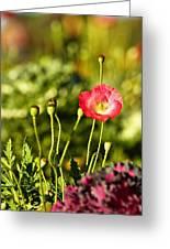 Opium Poppy Greeting Card by Suradej Chuephanich