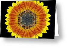 Orange and Yellow Sunflower Flower Mandala Greeting Card by David J Bookbinder