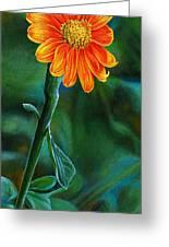 Orange Aster Greeting Card by Cara Bevan