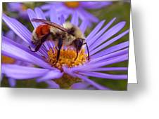 Orange-banded Bee Greeting Card by Rona Black