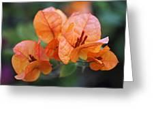 Orange Bougainvillea Greeting Card by Rona Black
