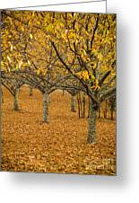 Orange Orchard Greeting Card by Tim Hester
