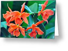 Orange Perfection Greeting Card by Gail Butler