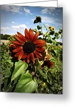 Orange Sunflower Greeting Card by Nafets Nuarb