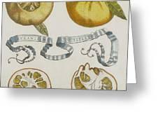 Oranges Greeting Card by Cornelis Bloemaert