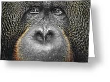 Orangutan Greeting Card by Svetlana Sewell