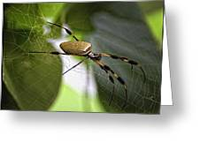 Orb Spider 2 Greeting Card by Lynn Andrews
