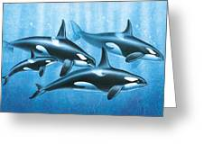 Orca Group Greeting Card by JQ Licensing