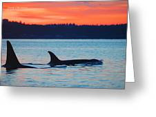 Orca Sunset Greeting Card by Annie Pflueger