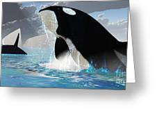 Orca Whales Greeting Card by Corey Ford