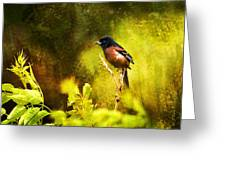 Orchard Oriole Greeting Card by J Larry Walker