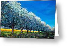 Orchard Row Greeting Card by Johnathan Harris