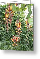 Orchid Falls Greeting Card by Sonali Gangane