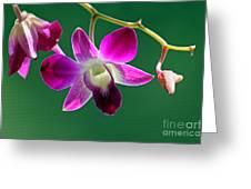 Orchid Flower Greeting Card by Karen Adams