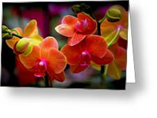 Orchid Melody Greeting Card by Karen Wiles