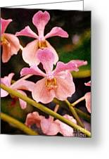 Orchid Number 17 Greeting Card by Floyd Menezes