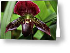 Orchid Greeting Card by Sandy Keeton