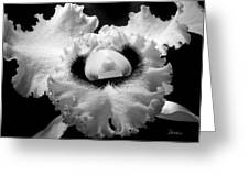 Orchid With Black Wings Greeting Card by Frederic A Reinecke