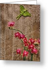 Orchids And Butterfly Greeting Card by John Haldane
