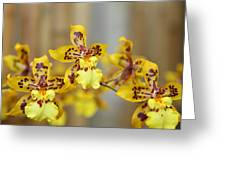 Orchids - Us Botanic Garden - 011345 Greeting Card by DC Photographer