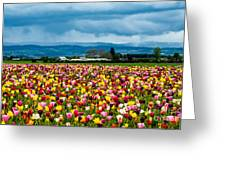 Oregon Tulip Farm - Willamette Valley Greeting Card by Gary Whitton