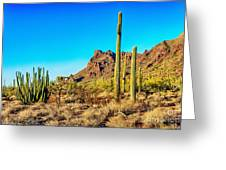 Organ Pipe Cactus National Monument Late Afternoon Greeting Card by  Bob and Nadine Johnston