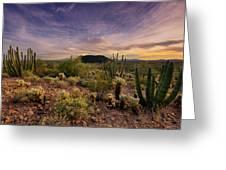 Organ Pipe Cactus Sunset Greeting Card by Saija  Lehtonen