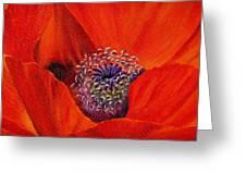 Oriental Poppy Greeting Card by Jo Appleby
