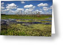 Orlando Wetlands Cloudscape 2 Greeting Card by Mike Reid