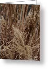 Ornamental Grass Greeting Card by Arlene Carmel
