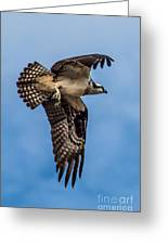 Osprey Flying Away Greeting Card by Robert Bales