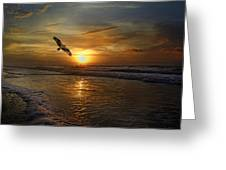 Osprey Sunrise Greeting Card by Betsy C  Knapp
