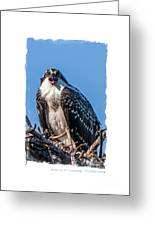 Osprey Surprise Party Card Greeting Card by Edward Fielding