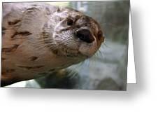 Otter Be Lookin' At You Kid Greeting Card by John Haldane