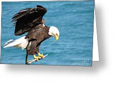 Our Finest American Bald Eagle Greeting Card by Mitch Spillane