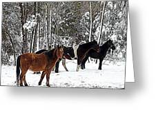 Our Horses Greeting Card by Vivian Cook
