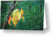 Out From The Darkness Greeting Card by Kathy Dolan