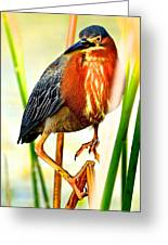 Out On A Reed Greeting Card by AnnaJo Vahle