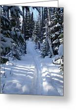 Out On The Trail Greeting Card by Sandra Updyke