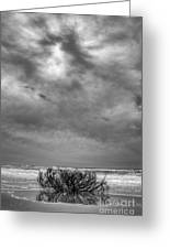 Outer Banks - Driftwood Bush On Beach In Surf IIi Greeting Card by Dan Carmichael