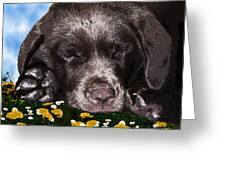 Outside Portrait Of A Chocolate Lab Puppy Greeting Card by Chris Goulette