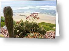 Overlooking San Elijo Beach Greeting Card by Ann Patterson