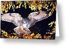Owl About To Land Greeting Card by Manfred Danegger