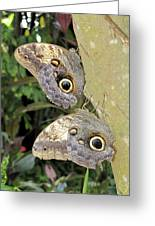 Owl Butterflies Greeting Card by Bob Slitzan