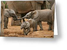 Pachyderm Pals Greeting Card by Bruce J Robinson