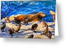 Pacific Harbor Seal Greeting Card by Jim Carrell