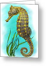 Pacific Seahorse Greeting Card by Roger Hall