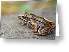 Pacific Tree Frog On A Rock Greeting Card by David Gn